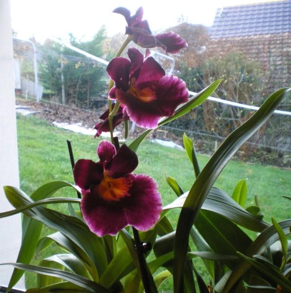 Comment bien entretenir mon orchide? - m