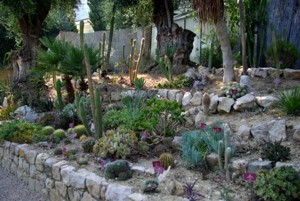 Photos val rahmeh menton parterre de cact es et for Plante grasse exterieur rustique