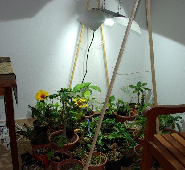 reflecteur horticole design au jardin forum de jardinage. Black Bedroom Furniture Sets. Home Design Ideas