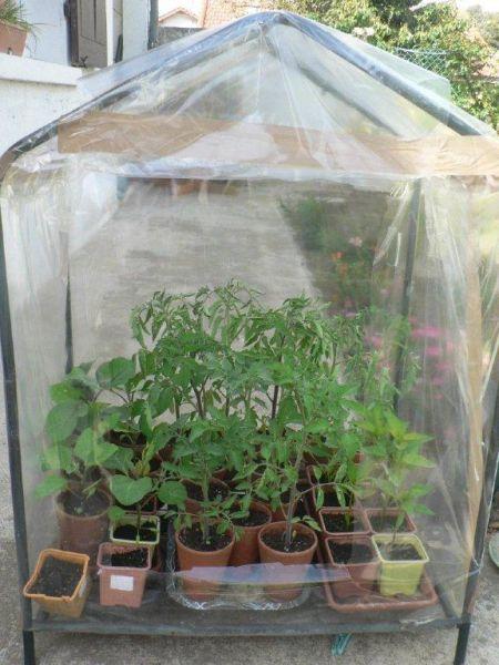 Mini Serre De Jardin En Plastique Meilleures Id Es Cr Atives Pour La Conception De La Maison